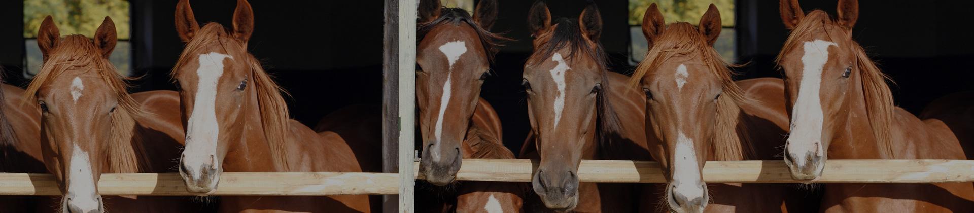 chevaux-et-pensions